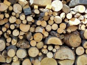 Štruktúra dreva 25.10.2014