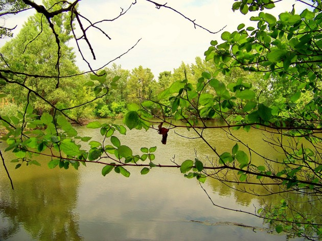 Malý Dunaj Potônské Lúky 1 - 19.5.2016