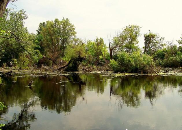 Malý Dunaj Potônské Lúky 26 - 19.5.2016