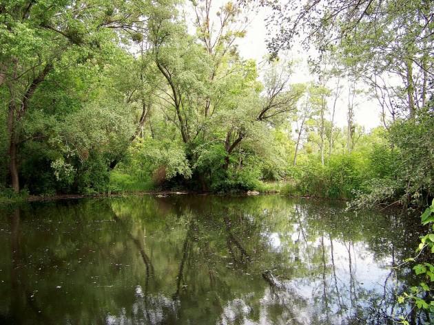 Malý Dunaj Potônské Lúky 35 - 19.5.2016