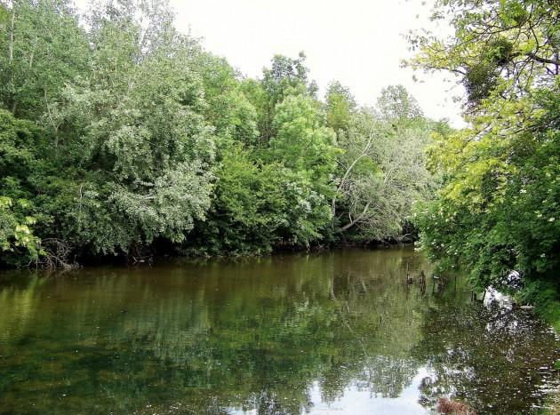 Malý Dunaj Potônské Lúky 38 - 19.5.2016