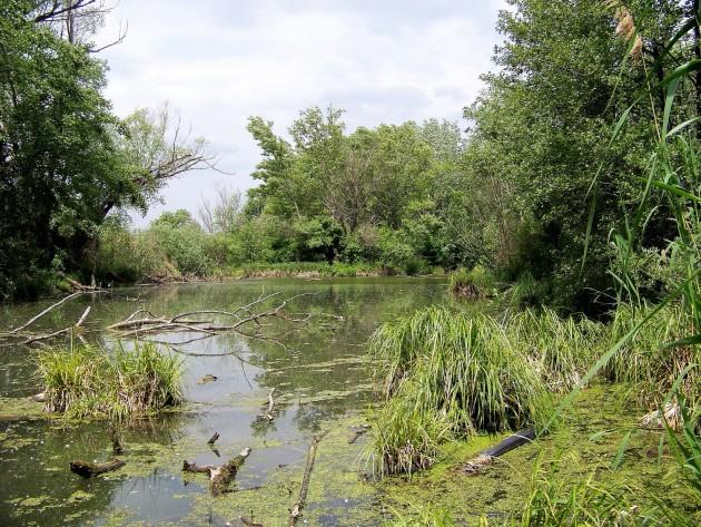 Malý Dunaj Potônské Lúky 4 - 19.5.2016