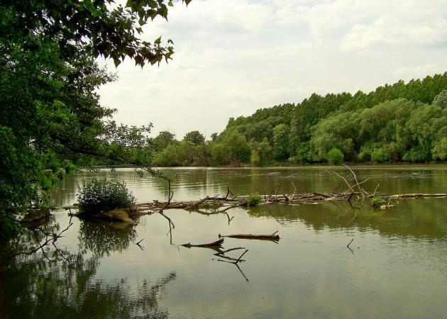 Malý Dunaj Potônské Lúky 41 - 19.5.2016