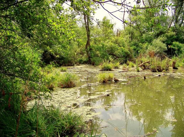 Malý Dunaj Potônské Lúky 8 - 19.5.2016